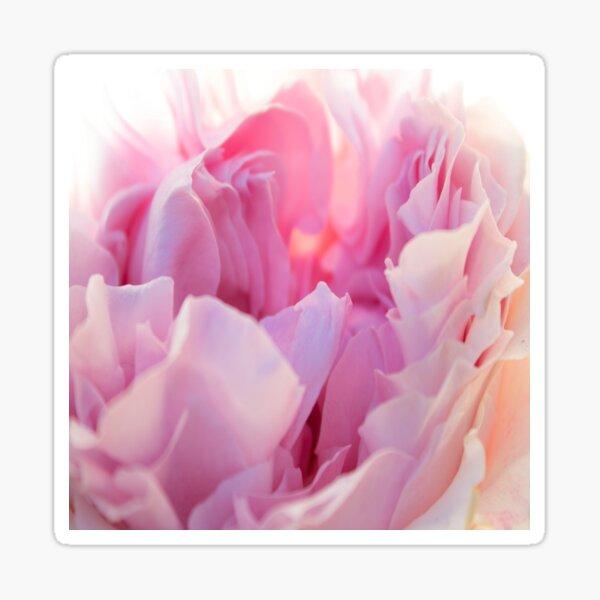 Pastel Pink Rose Petals Sticker