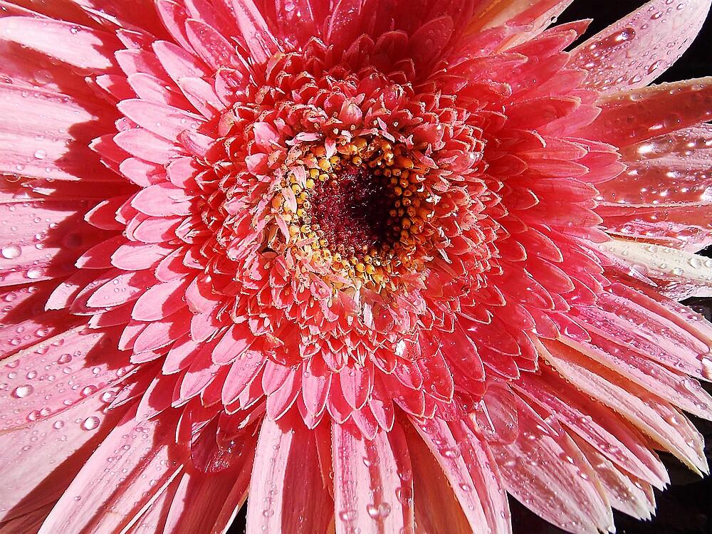 751-beauty gerber by elvira1