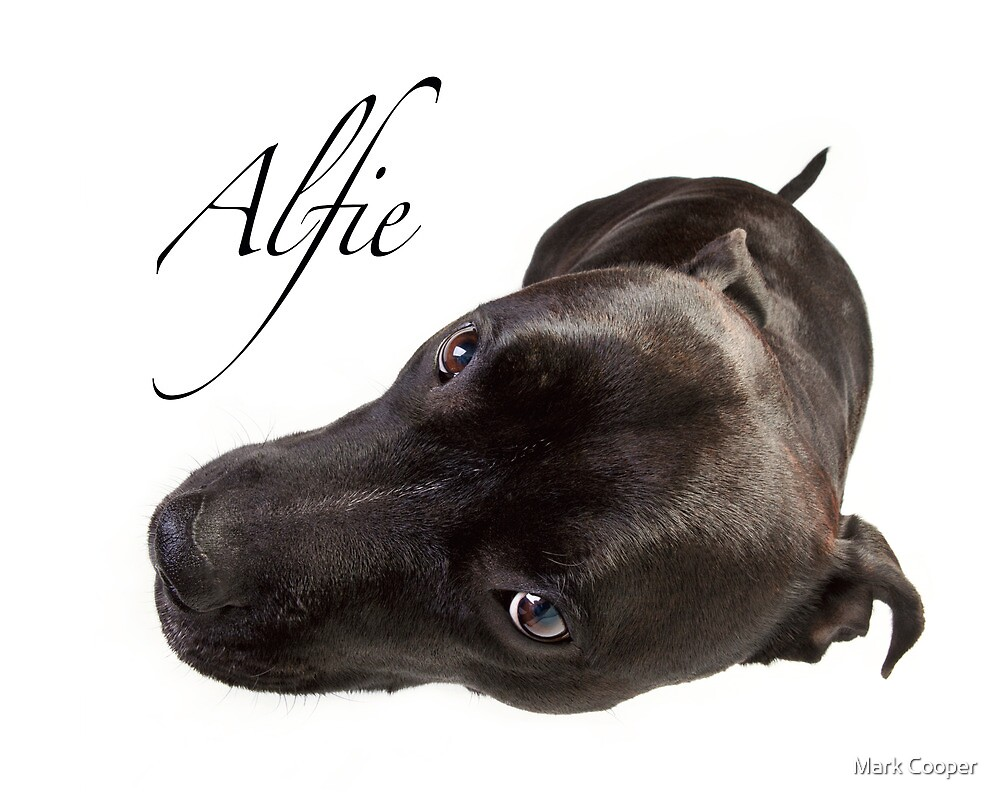 Alfie by Mark Cooper