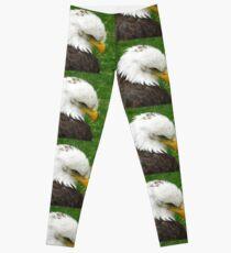 The American Bald Eagle Leggings