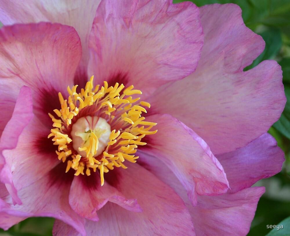 Emperor Among Flowers by seeya