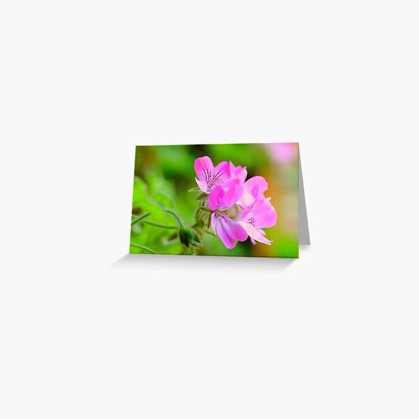 Scented pelargonium Greeting Card