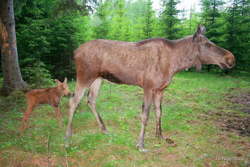 Eurasian Elk with Calf by Jo Nijenhuis
