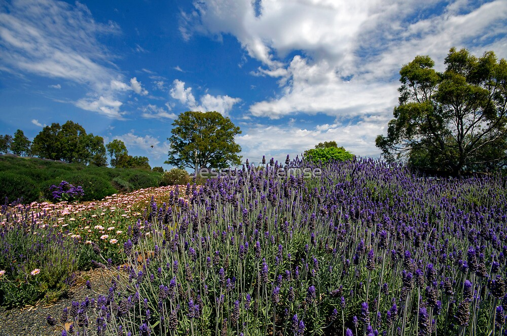 Lavender by Jessy Willemse