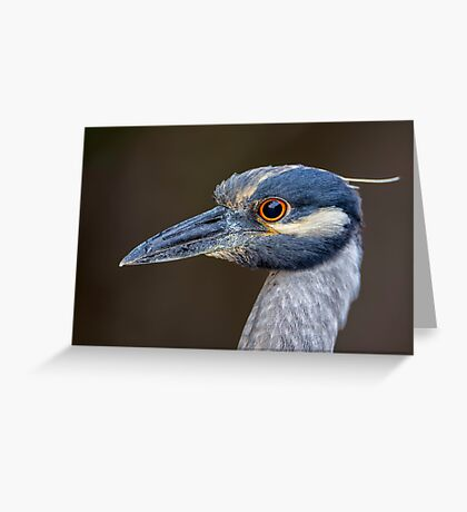 Yellow Crowned Night Heron Portrait Greeting Card