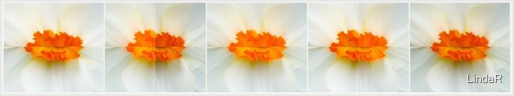 Daffodil Kisses... by LindaR