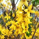 Sprig of Forsythia by Susan Savad