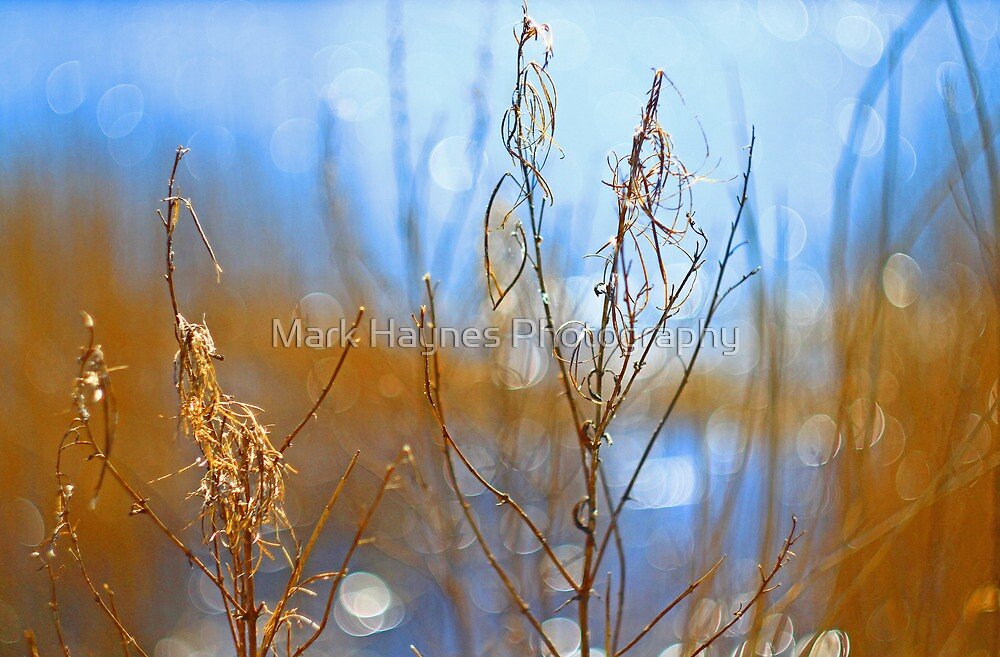Waterscape Bokeh by Mark Haynes Photography