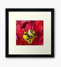 Centre of a Tulip Framed Print