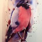 Mr Bullfinch iPhone & IPod case  by Karl Fletcher