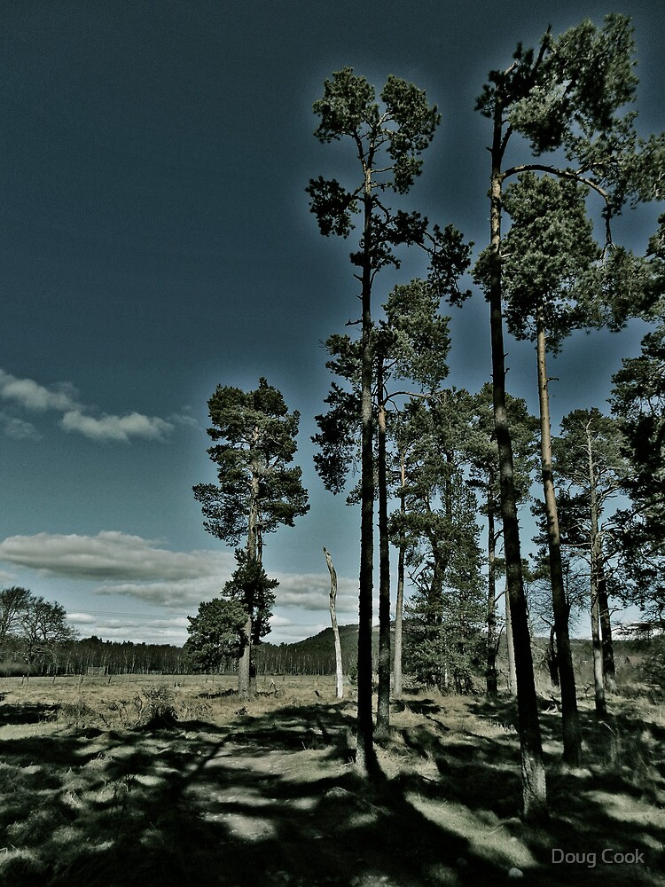Aviemore Pines by DougCook