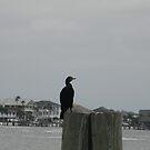 Black Bird by remiliej