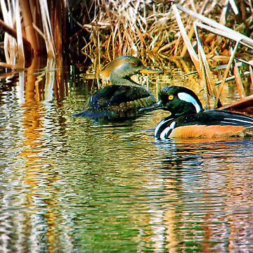 GoldenEye Pair by Nazareth