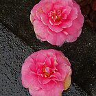 sidewalk lotus 2 by dedmanshootn
