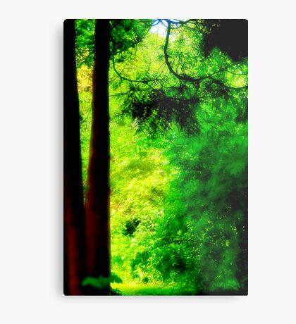 Trees and light Metal Print