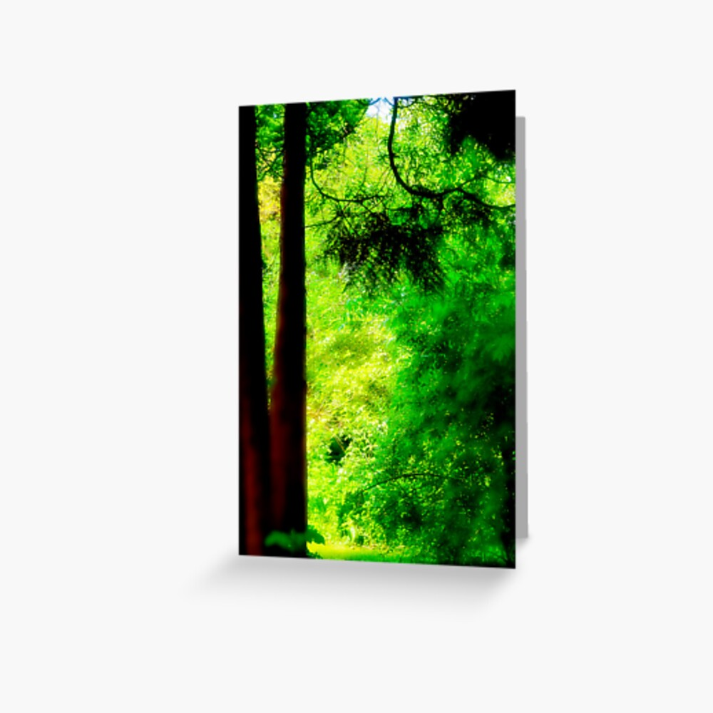 Trees and light Greeting Card