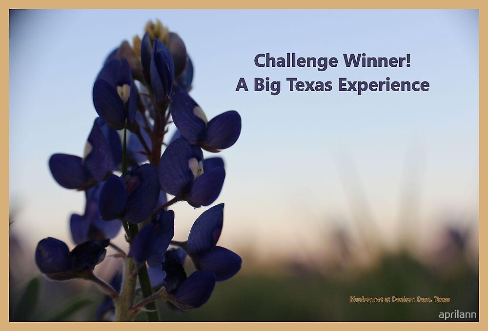 Banner - ABTE - Challenge Winner by aprilann