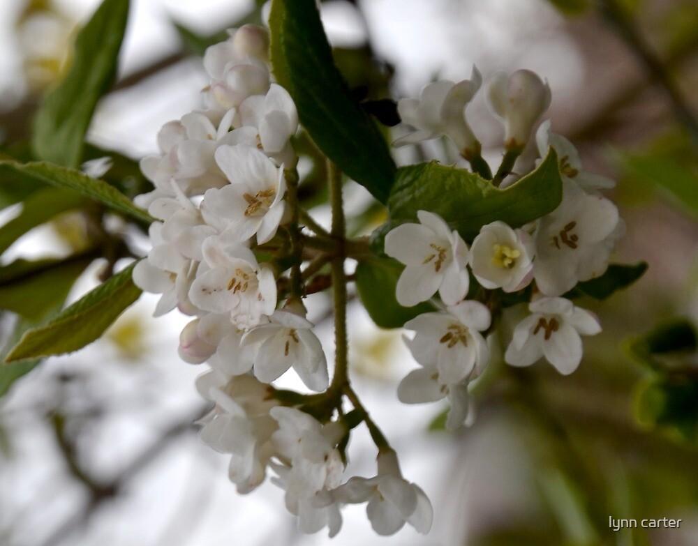 Mother Nature Bouquet  by lynn carter