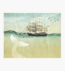 White Tail Photographic Print