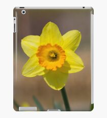Single Yellow Daffodil  iPad Case/Skin
