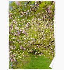 A walk among blossoms Poster