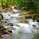 Springbrook National Park by sarcalder