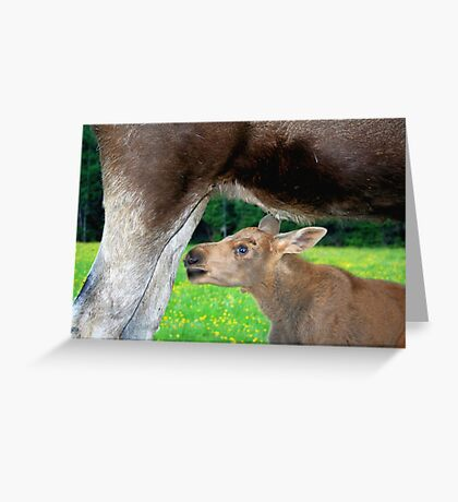 Baby Moose - Searching for Milk Greeting Card