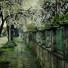 blossom avenue by passerby2