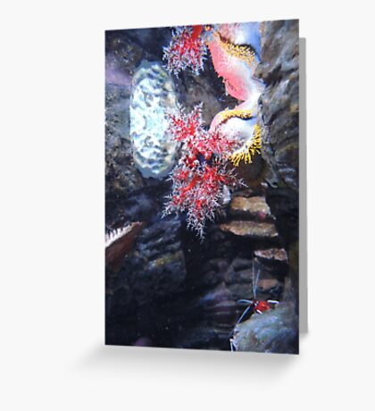 The Coral and the Shrimp Greeting Card