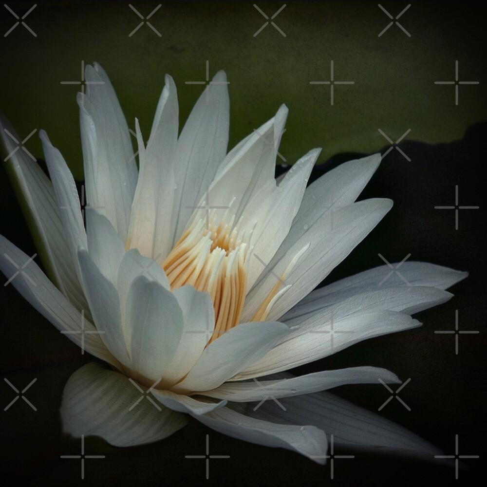 White beauty by EbyArts
