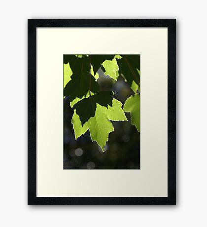 Leaves - Light - Dancing Framed Print
