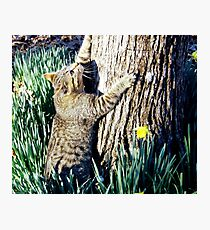 The Tree hugger Photographic Print