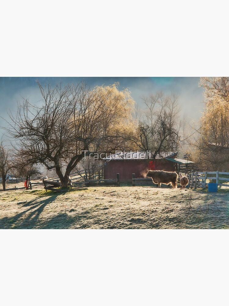 Morning Farmyard 1  by taos
