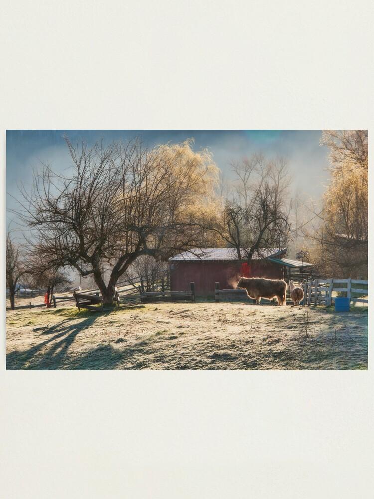 Alternate view of Morning Farmyard 1  Photographic Print