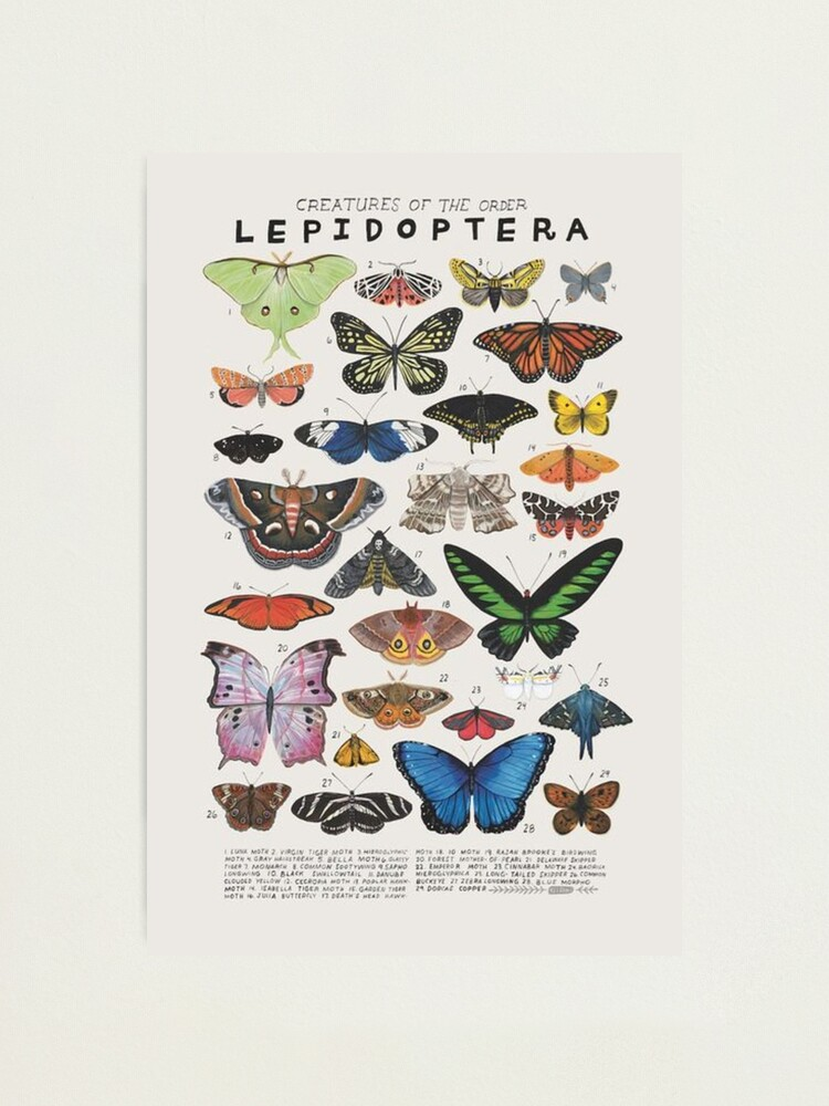 Alternate view of 90s butterfly aesthetic Photographic Print