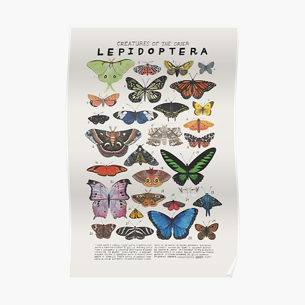 90s butterfly aesthetic Poster