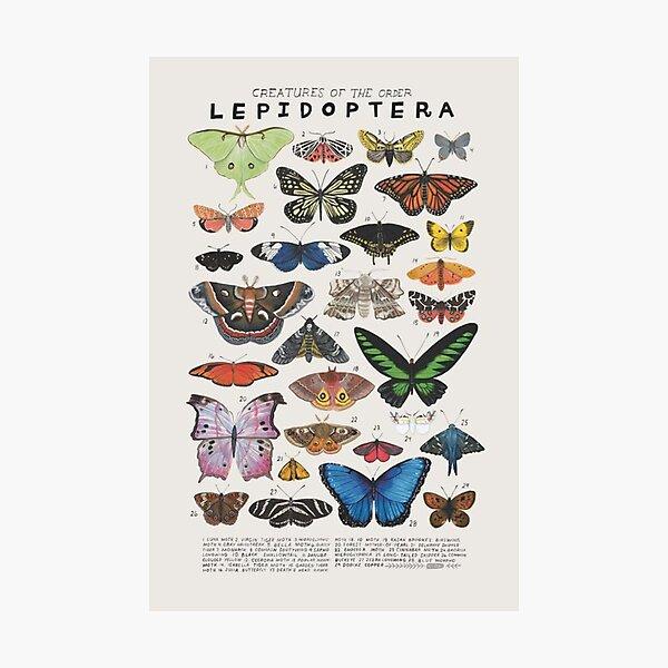 Esthétique papillon des années 90 Impression photo