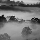 Days first Breaths... by debsphotos