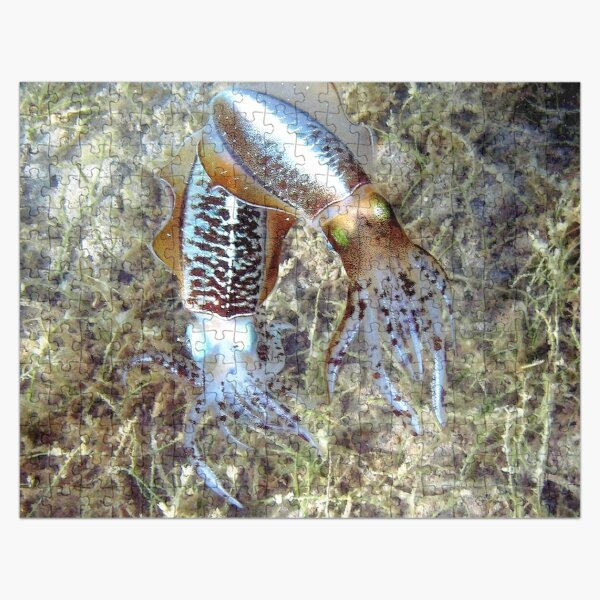 Watercolor Squid, Caribbean Reef Squid 01, St John, USVI, Iridescent Dreams Jigsaw Puzzle