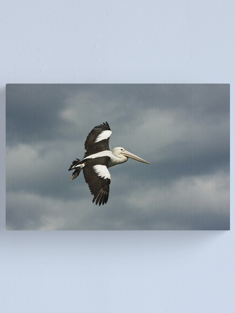 Alternate view of Flying Pelican Canvas Print