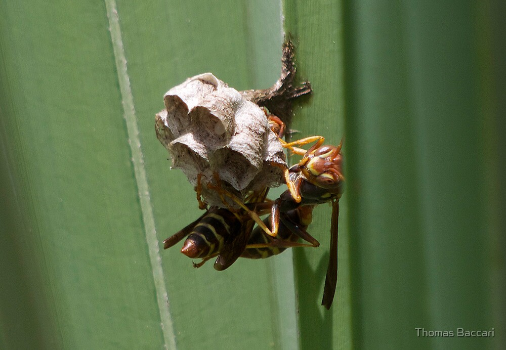 Busy Building my Hive by TJ Baccari Photography
