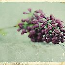 vintage lilac buds by passerby2