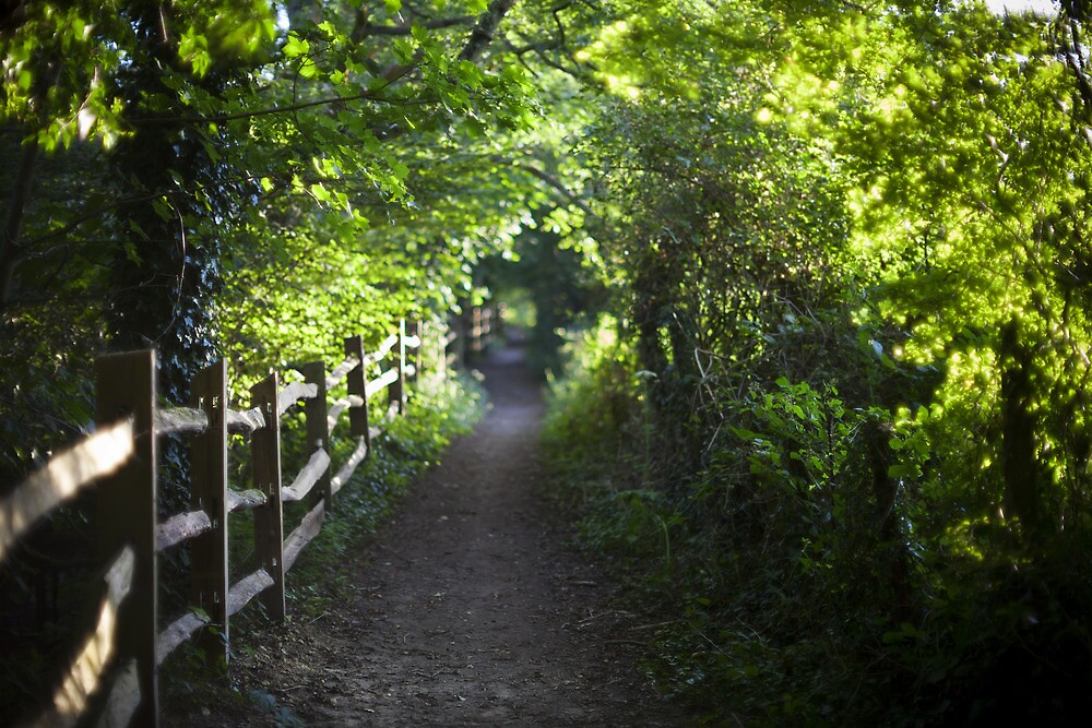 the path to bokeh land by James Calvey