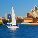 Sailing the Harbour by Todd Kluczniak