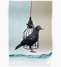 bird in the wire Poster