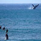 Whale Watching at Waimea by kevin smith  skystudiohawaii