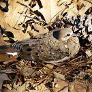 Baby Dove by WildestArt