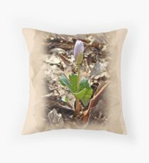 Bloodroot Wildflower - Sanguinaria canadensis Throw Pillow