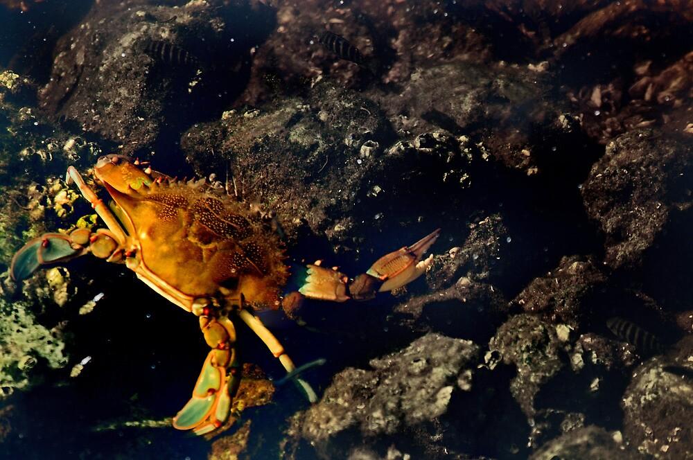 Crab Walk  by John  Kapusta