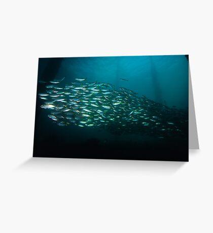 Yellowtail Mackerel Greeting Card